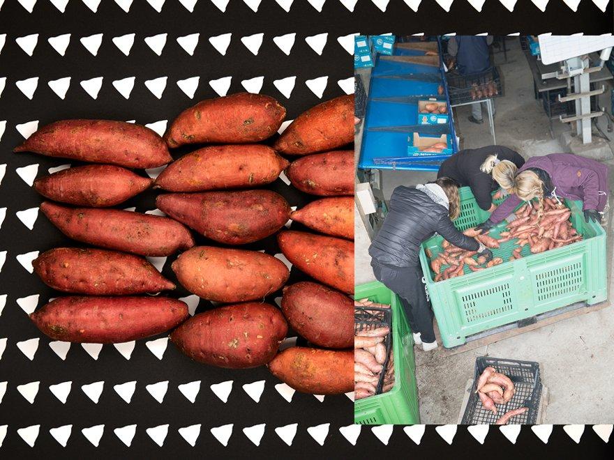 patate douce avant et après culture