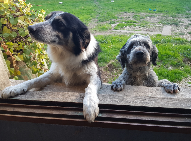 les chiens truffiers