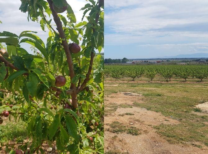 Diptyque fruit et champs