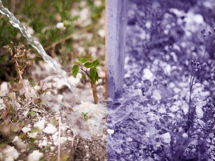Herbes aromatiques Domaine Saint-Géry