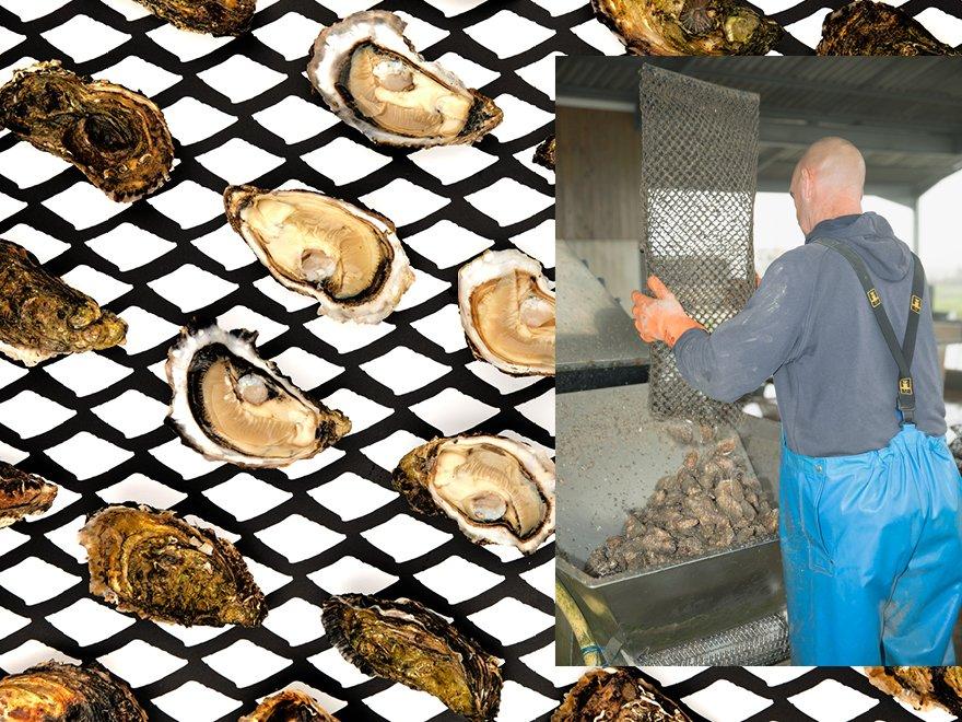 Huîtres naturelles du Cayens Michael Poirier