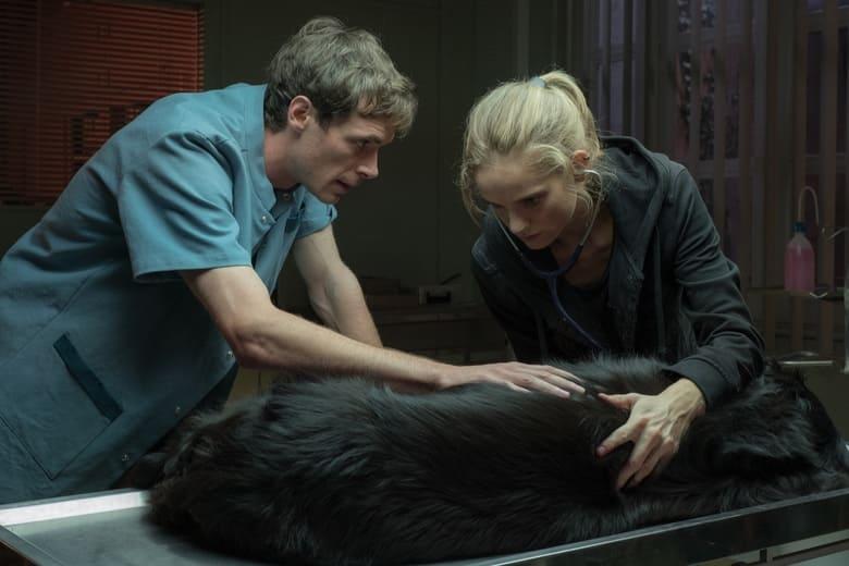 Vétérinaire ausculte chien
