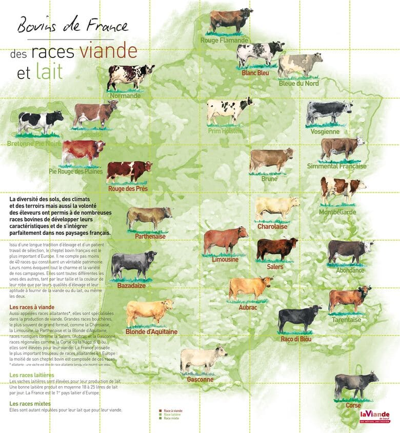 Carte des différentes races bovines de France viande et lait