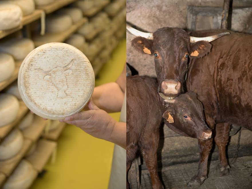 Fromage L'Acajou lait Salers Cambon