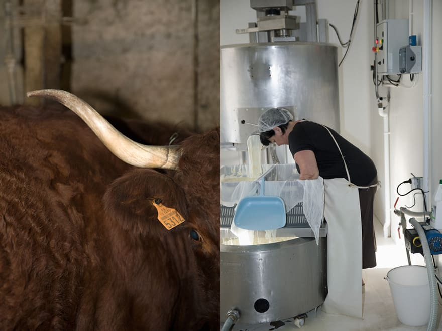 Nathalie Cambon produit du fromage au lait de Salers