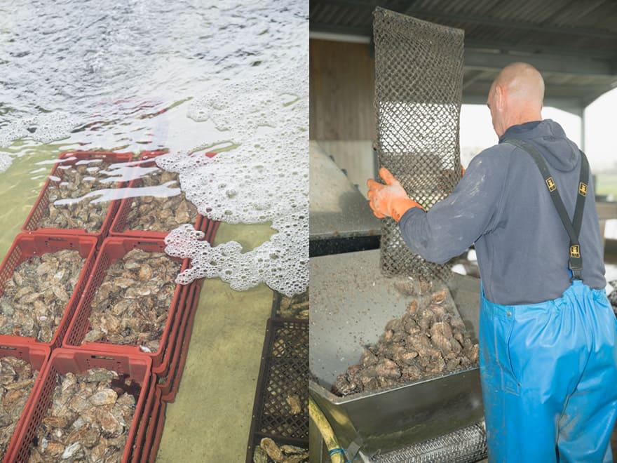 Pêche huîtres naturelles du Cayens Île d'Oléron