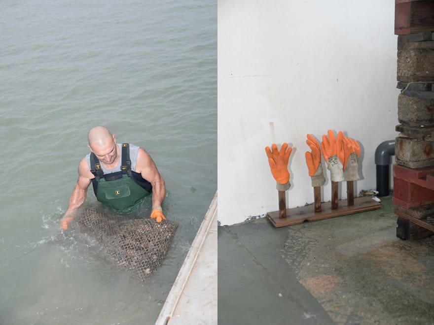 Michael Poirier pêche des huîtres naturelles à Marennes