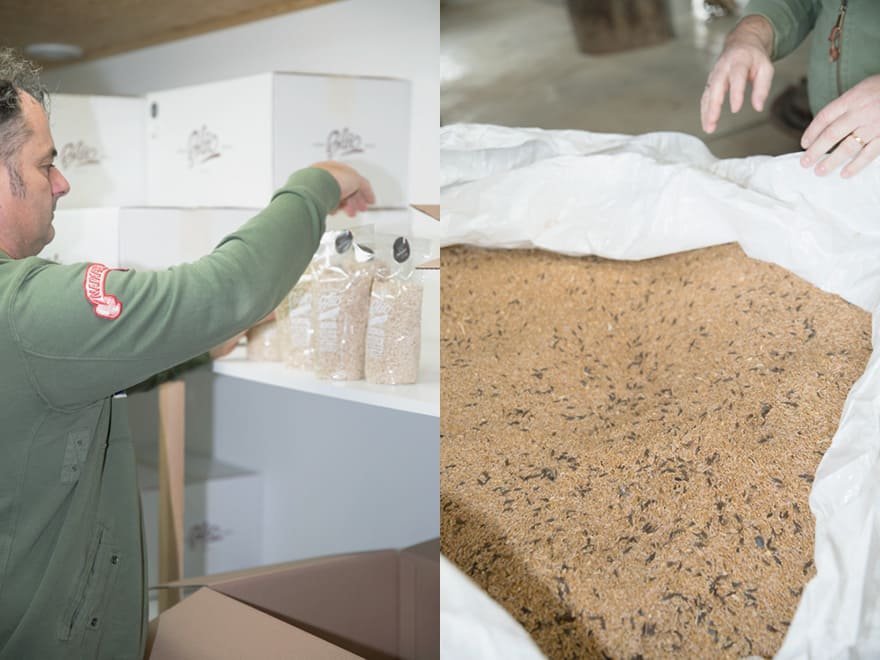 Production de pâtes artisanales BLÉO EARL Pacaud